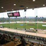 Courses de levriers Greyhound en Irlande
